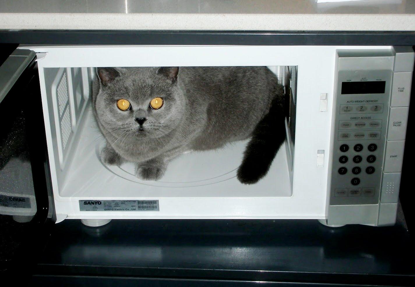Кот в СВЧ